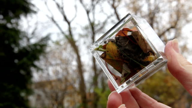 Autumn in a box Looking at a transparent cube with autumn leafs, branch and fruits from autumn. Natural ressources of Canada chlorine stock videos & royalty-free footage
