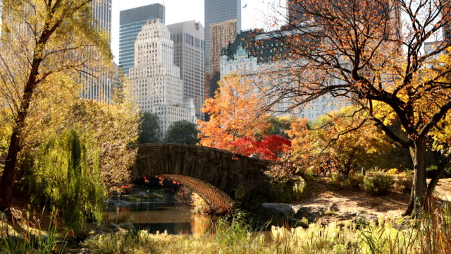Autumn in Central Park New York City Lock down view of Central Park pond and the midtown skyline during autumn in New York City. central park manhattan stock videos & royalty-free footage