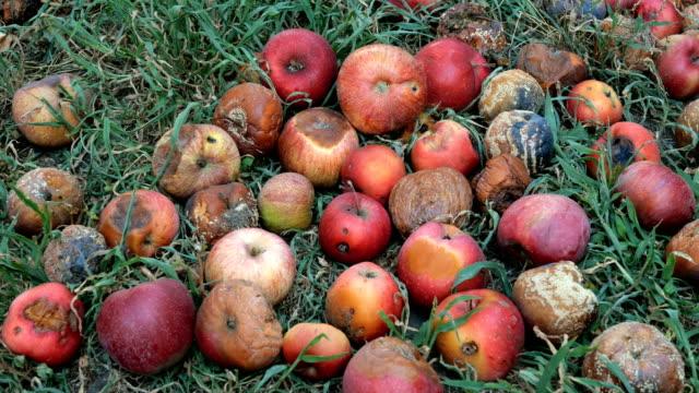herbst im garten. die zersetzen von roten äpfeln liegt auf dem boden. alterungskonzept. - verfault stock-videos und b-roll-filmmaterial