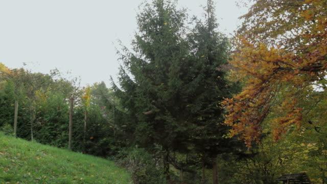 Autumn in nature video