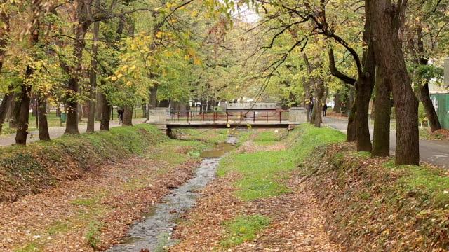 Autumn in park video