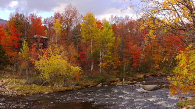 autumn in the adirondacks - rivulet 4k stock videos and b-roll footage