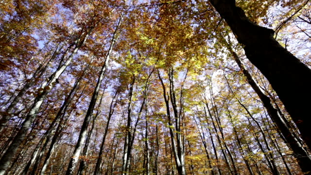 Autumn in the Foreste Casentinesi National Park in Italy. video