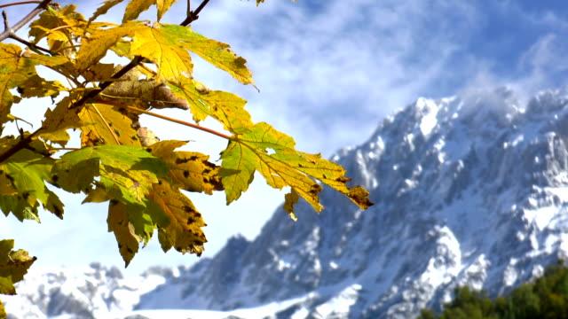 herbst auf die berge - laub winter stock-videos und b-roll-filmmaterial