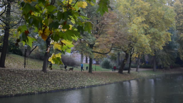 Autumn in the park video