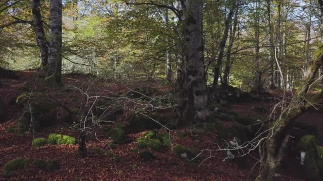 Autumn in Urbasa video