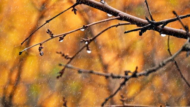 vídeos de stock, filmes e b-roll de paisagem de outono. park no outono. - setembro amarelo