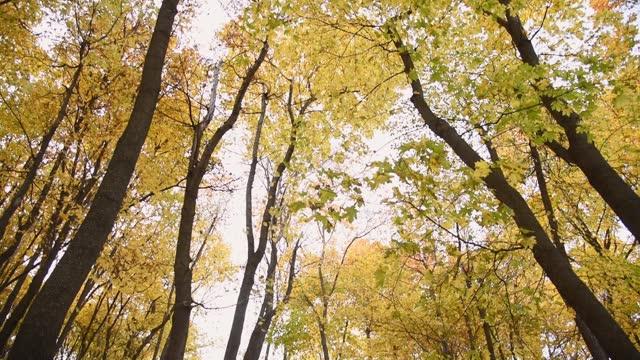 vidéos et rushes de paysage d'automne. le chemin est parsemé de feuilles sèches dans la forêt. - avenue