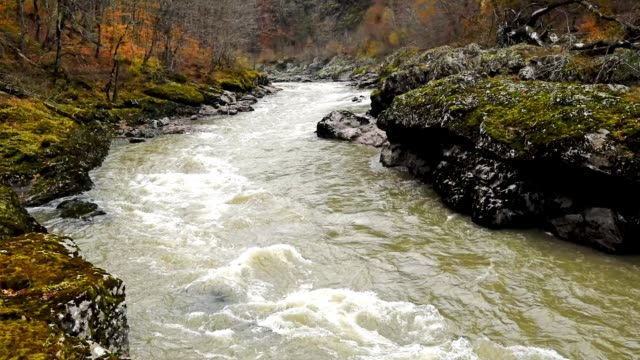 Autumn landscape with mountain river video