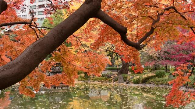 Autumn Leaf Color of Hibiya Park in Tokyo: 4K Resolution