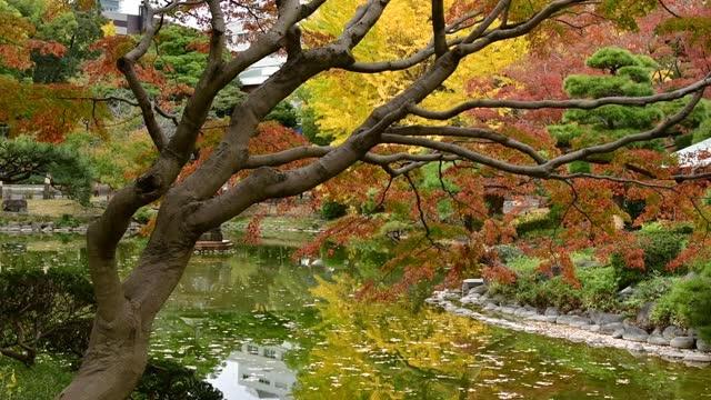 東京日宮公園的秋葉顏色 - 銀杏樹 個影片檔及 b 捲影像
