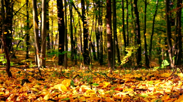 Autumn Leaf Fall in the Park. Seamless Loop Autumn. Sunny and windless weather in the Park. Leaves fall on the carpet of yellow leaves. Seamless loop fall background stock videos & royalty-free footage
