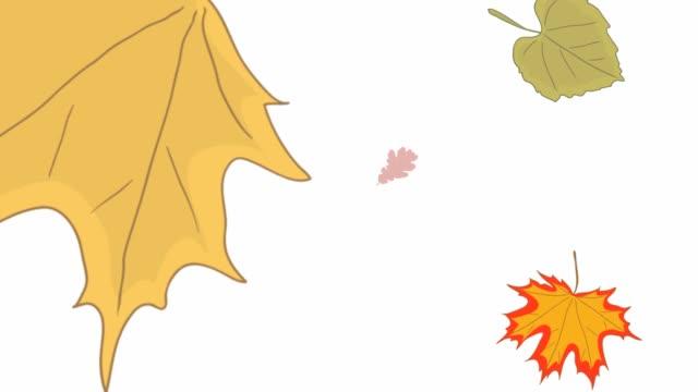 осенняя осень листьев - white background стоковые видео и кадры b-roll