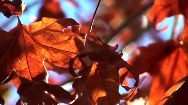 vidéos et rushes de feuilles d'automne au ralenti en haute définition - couleur saturée