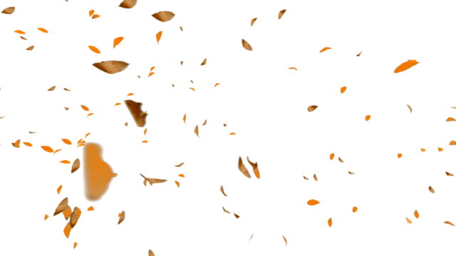Autumn Leafs Flying, white background