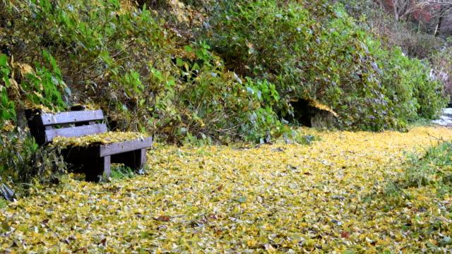 秋の葉とベンチ - ベンチ点の映像素材/bロール