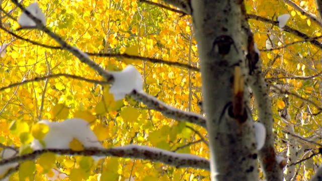 Autumn leaves and snow video