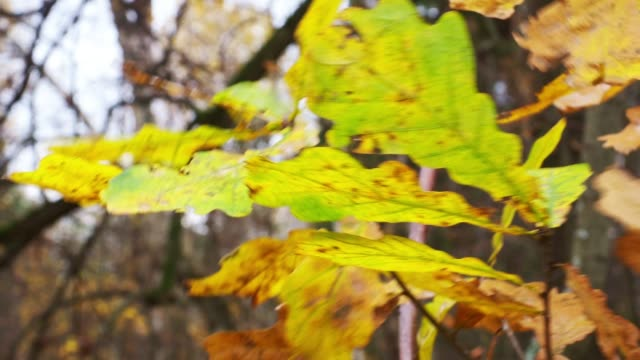 Autumn leaves and trees video
