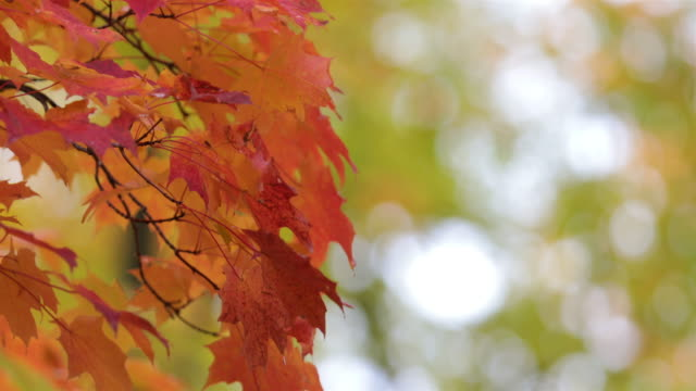 Autumn Leaves Background UHD 4K