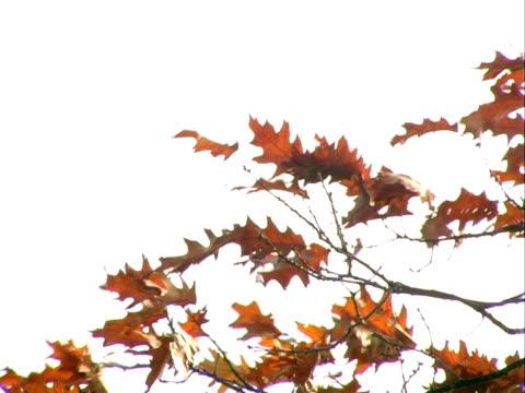 가을 낙엽 불기 풍력. 프로그래시브 프레임 - 클립 길이 스톡 비디오 및 b-롤 화면