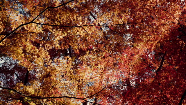 Autumn leaves blowing in the wind. video