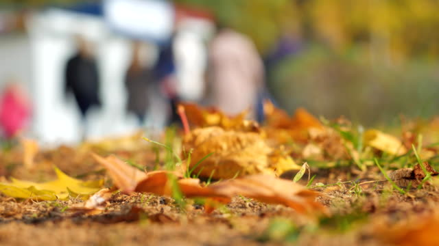 Autumn leaves close-up. In the background, people walk in the autumn park. The crowd of unknown lyudy blurred out of focus for background