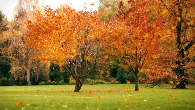 Autumn leaves fall on the grass, background video