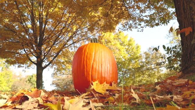 Autumn Leaves Falling Around Pumpkin