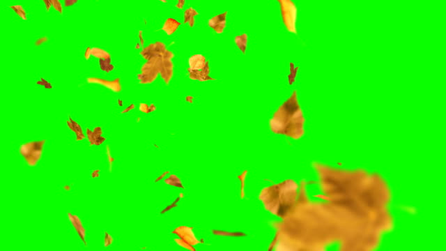 Autumn leaves falling down on green screen chroma key loopable background
