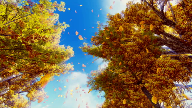 Autumn leaves falling from trees in slow motion video