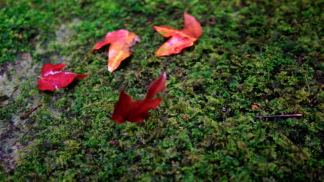 Autumn leaves falling in slow motion through fall leaves. Beautiful landscape background. video