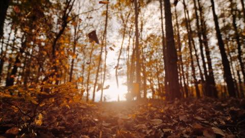 ms super slow motion foglie autunnali che cadono in una foresta soleggiata e tranquilla - rallenti video stock e b–roll