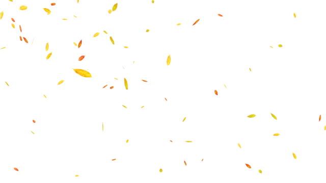 Autumn Leaves Falling. Loop Animation.
