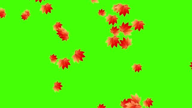 Autumn leaves falling loop, green screen chroma key video