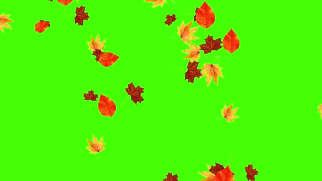 Autumn leaves falling loop, green screen chroma key