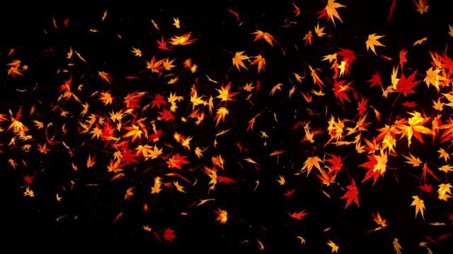Autumn Leaves Falling on Black Background, Maple Leaf, Loop Glitter Animation,
