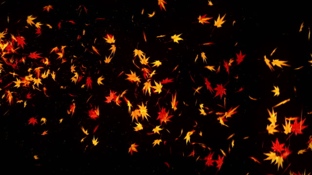 Autumn Leaves Falling on Black Background, Maple Leaf, Loop Glitter Animation, Maple Leaves Spin Loop CG Animation maple leaf videos stock videos & royalty-free footage