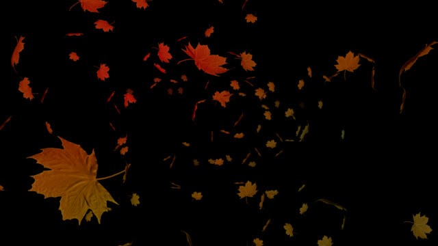 Autumn leaves falling on black background Red and orange autumn leaves falling on black background with copy space fall background stock videos & royalty-free footage