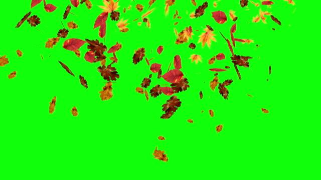 vídeos y material grabado en eventos de stock de las hojas otoñales caen sobre la pantalla verde, el fondo editable de chroma key - fall leaves