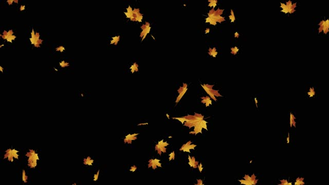 autumn leaves falling realistic 3d alpha channel loop animation. golden maple and oak leaves. - thanksgiving background stock videos & royalty-free footage