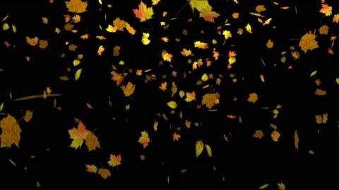 vídeos de stock e filmes b-roll de folhas de outono caindo com alpha matte - folha