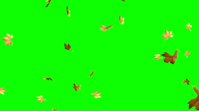 vídeos de stock e filmes b-roll de autumn leaves falling with green screen - leaf