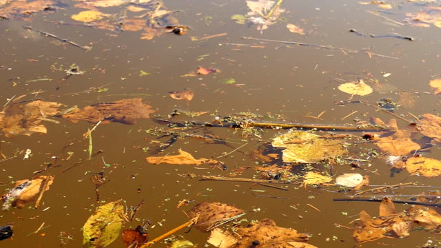 Autumn leaves float in brown water background video