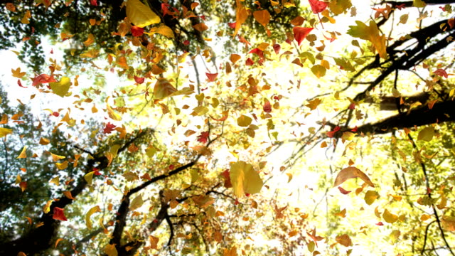 vídeos de stock e filmes b-roll de autumn leaves from above - 4k 60fps realistic atmospheric video background loop - folha vermelha