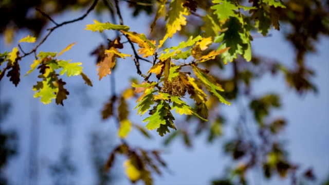 Autumn leaves in the forest video