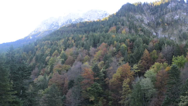 Autumn leaves in the mountain video