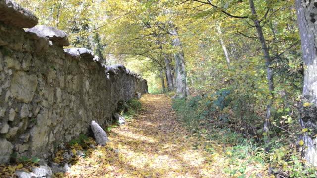 Autumn leaves in the park Autumn leaves in the park light natural phenomenon stock videos & royalty-free footage