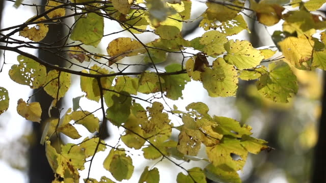 yavaş çekimde bir dal üzerinde sonbahar yaprakları - sale stok videoları ve detay görüntü çekimi