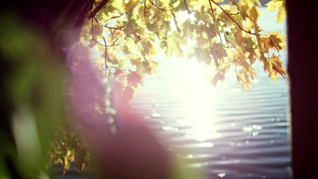vidéos et rushes de feuilles d'automne sur un lac. soleil qui brille entre les troncs d'arbres - lac reflection lake