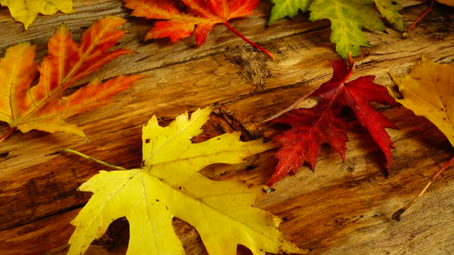 Autumn leaves on a wooden vintage board. video